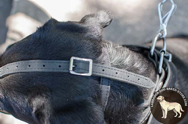 Reliable Leather Labrador Muzzle with Irreplaceable Straps