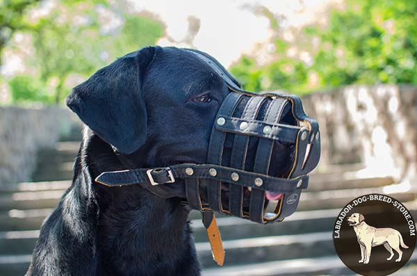 Leather Labrador Muzzle for Obedience Training