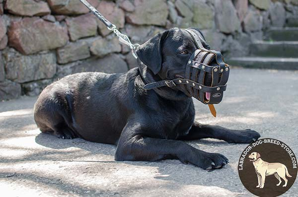 Comfy Padded Leather Labrador Muzzle