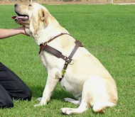 Tracking/Pulling Leather Dog Harness For Labrador